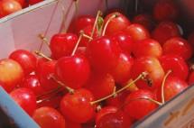 cherry450